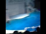 erika_anikina video