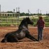 Объединение мягкого воспитания лошадей.БЕЛАРУСЬ!
