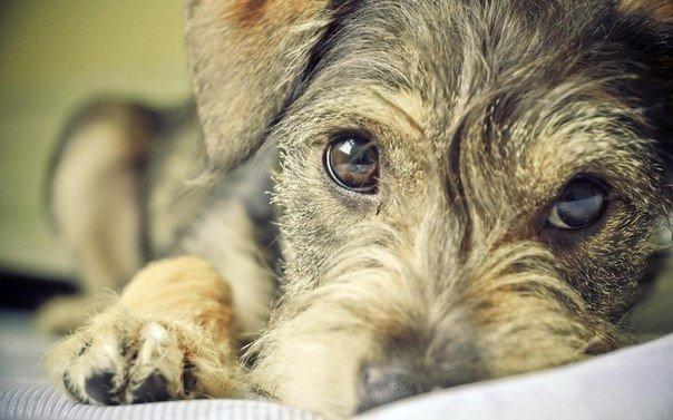 Состраданье к животным так тесно связано с добротою характера...