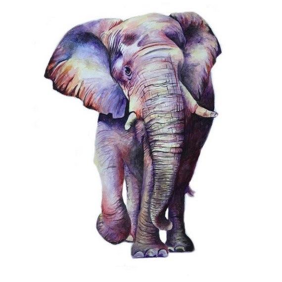 Слон с расцветкой бабочки 😃