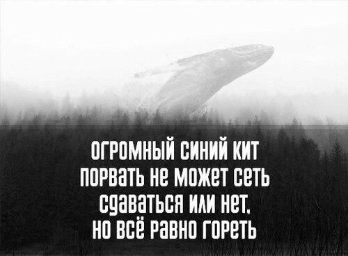 http://cs14102.vk.me/c540101/v540101294/3f30d/udoiXJsUDos.jpg