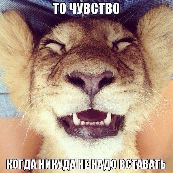http://cs14111.vk.me/c540101/v540101493/10b09/byX4uHuh9vM.jpg