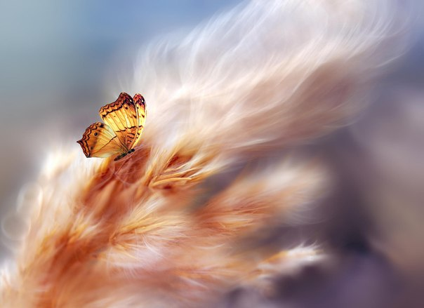 Если бы гусеница держалась за прошлое, она бы никогда не стала бабочкой.
