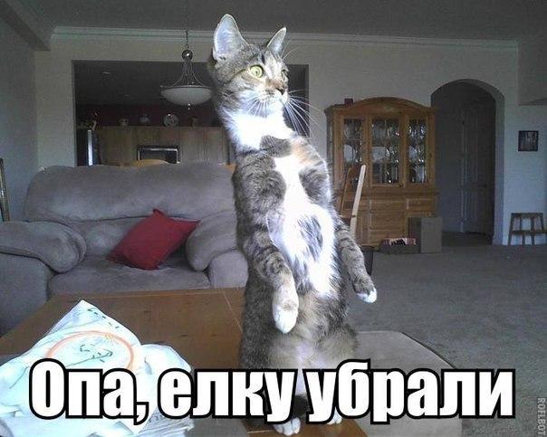 http://cs7065.vk.me/c540101/v540101614/571b7/vBf006RXGM0.jpg