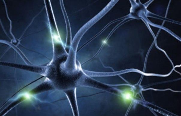 Биоинженеры из Университета Шеффилда создали особое устройство из микротрубок, которое позволяет восстанавливать повреждённые нервы. Новинка была напечатана на 3D-принтере и успешно протестирована на животных.