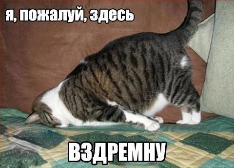 http://cs14113.vk.me/c540101/v540101881/282c5/rWf1wsrXNLM.jpg