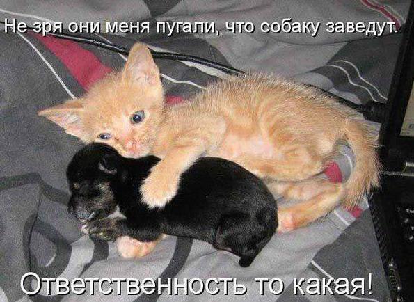 http://cs14114.vk.me/c540101/v540101987/16389/MF2yLBOU_sQ.jpg