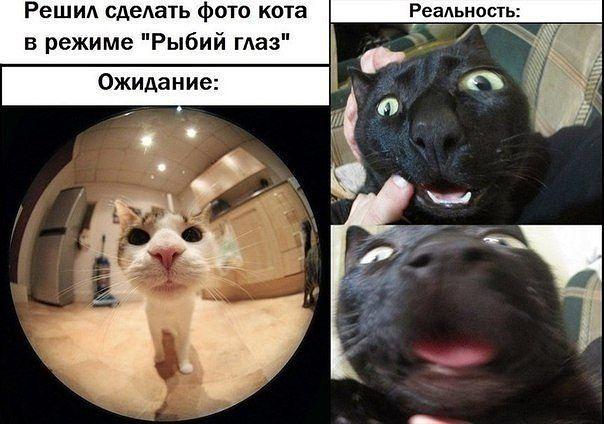 http://cs14106.vk.me/c540102/v540102120/13539/IqXVHeZsLZU.jpg