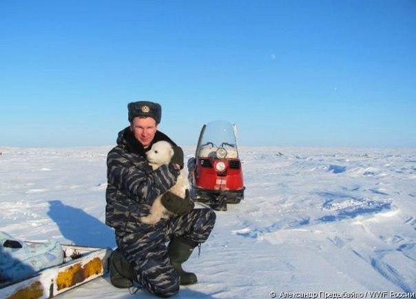 На Чукотке нашли одинокого медвежонка. Почему он остался без матери, неизвестно: возможно, она погибла от рук браконьеров. В скором времени медвежонка отправят в один из арктических заповедников, а пока заботиться о нем будут жители чукотского села Билингс