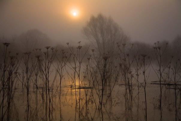 Туманное утро на Истье. Автор фото — Борис Дмитриев: