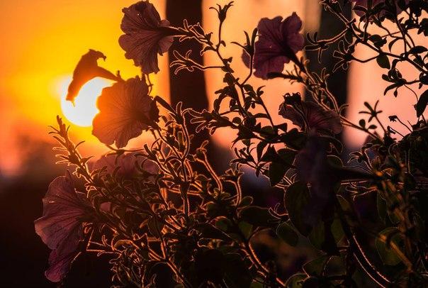 В фотоконкурсе «Краски жизни» идет второй этап, в ходе которого финалисты проводят тест-драйв фотооборудования. Этот снимок сделан Станиславом Бартникасом на камеру Fujifilm X-T10 с объективом 16-50мм. Подробная информация о конкурсе и работы, позволившие шести участникам выйти во второй этап, здесь: