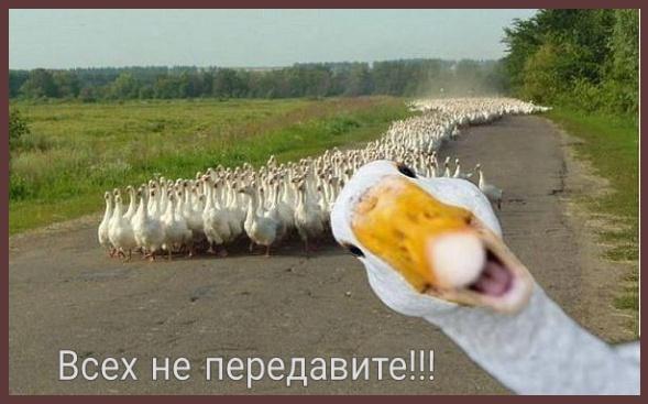 Россия ввела ограничения на закупки импортных продуктов - Цензор.НЕТ 2671