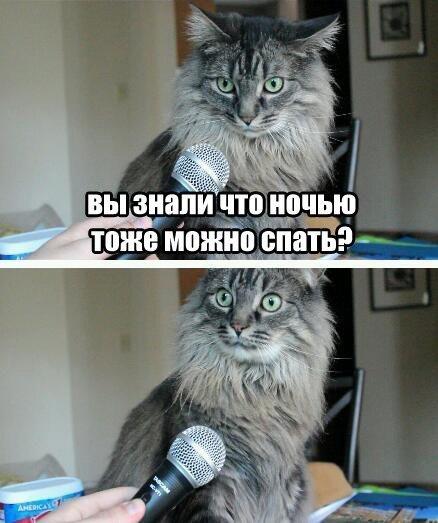 http://cs14106.vk.me/c540102/v540102243/68bd/preLZNKMc34.jpg