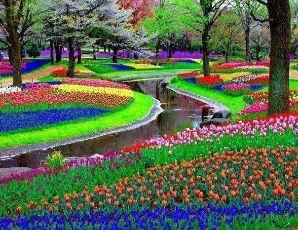 Парк Keukenhof неподалеку от Амстердама, Нидерланды