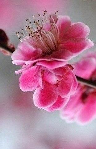 Порция весны