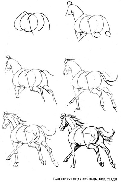 Видео уроки поэтапного рисования карандашом