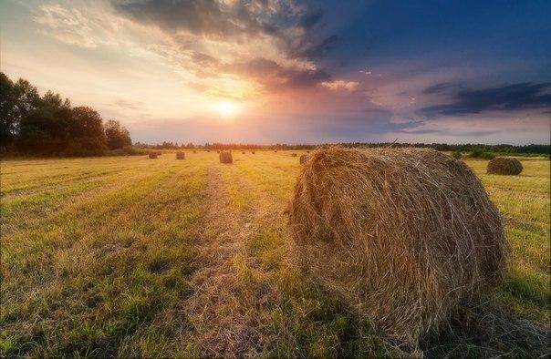 Вблизи села Савинское, Ярославская область. Автор фото: Сергей Сутковой.