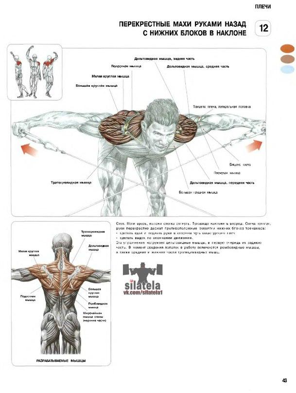Упражнения для плечей и рук в домашних условиях