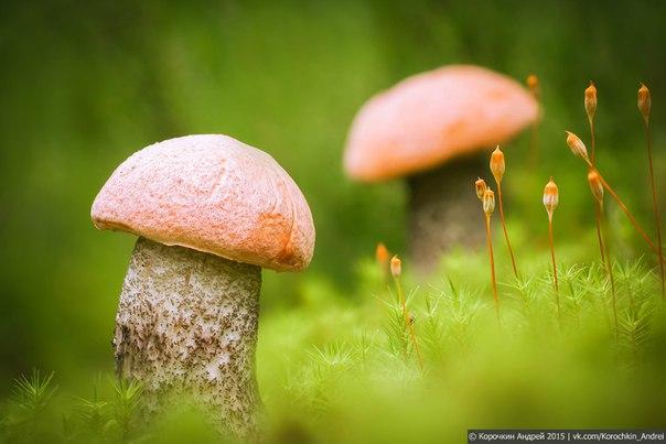 Пора по грибы! Автор фото – Андрей Корочкин.