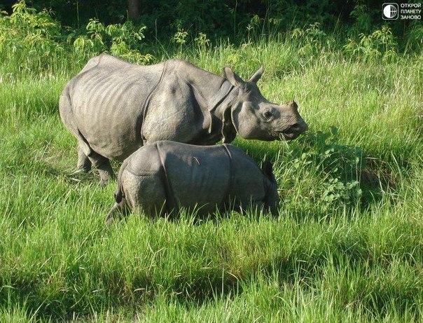 Национальный парк Читван в Непале