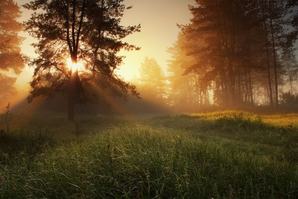 Рассвет в сосновом лесу. Автор фото — Виктор Тулбанов