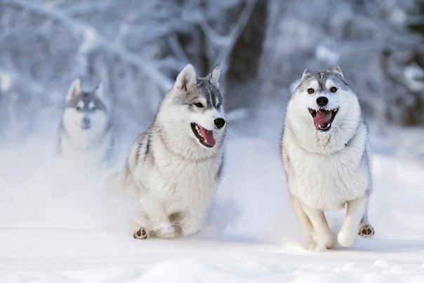 «Снежная тройка». Фотограф — Андрей Ершов: А как бы вы назвали это фото?