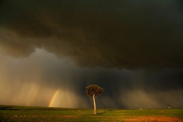 Национальный парк Масаи Мара, Кения. Фотограф — Марк Подрабинек