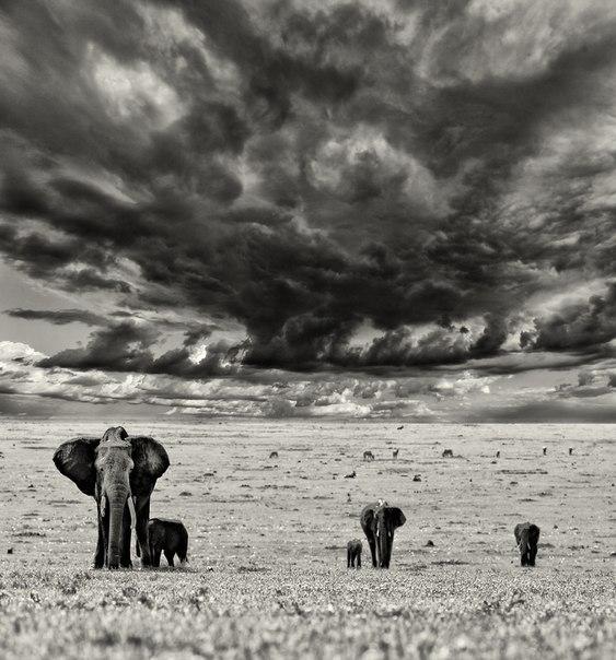 Суровое небо над заповедником Масаи-Мара, Кения. Автор фото — Марк Подрабинек: nat-geo.ru/photo/user/51173/