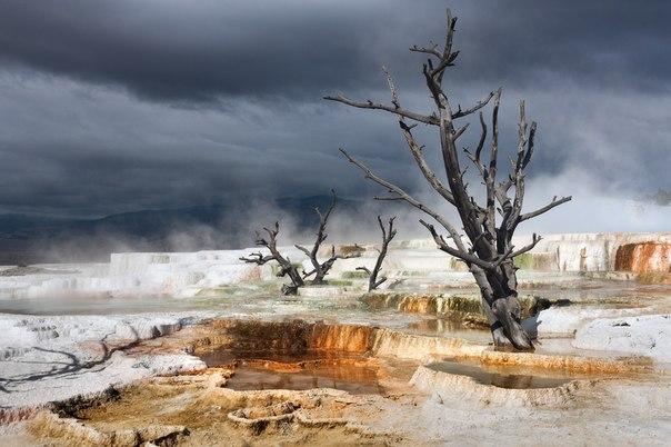 Термальные источники в национальном парке Йеллоустон, США. Автор фото — Виктория Роготнева: nat-geo.ru/photo/user/118132