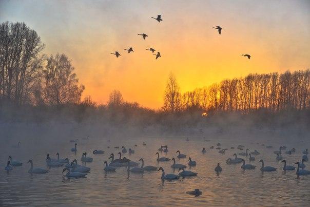 Закат на Лебедином озере. Алтай. Автор фото — Алексей Саламатов: nat-geo.ru/photo/user/162268 Хороших выходных!