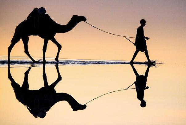 Напарники спешат на добычу соли. Озеро Ассаль, Республика Джибути. Автор фото — Ромео Чобанян: nat-geo.ru/photo/user/166851/