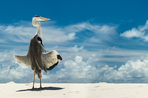 «Ловец солнца». Мальдивы. Автор фото — Денис Асташкин: nat-geo.ru/photo/user/170901/