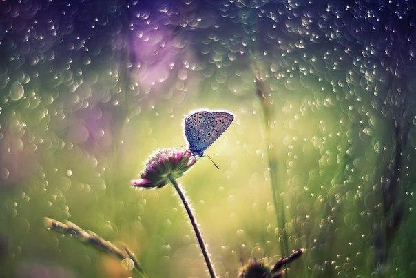 «Про одну маленькую бабочку». Автор фото — Наталья Бачкова: nat-geo.ru/photo/user/29452/