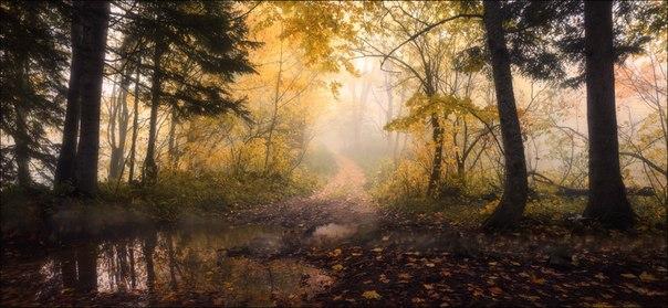 Осенней лес. Адыгея, Россия. Автор фото — Влад Соколовский: nat-geo.ru/photo/user/13879/
