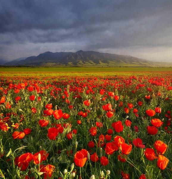 «Драгоценные камни». Недалеко от Бишкека, Киргизия. Автор фото — Сергей Сутковой: nat-geo.ru/photo/user/44653/
