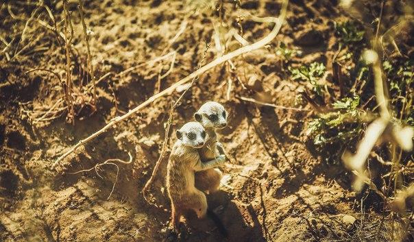 «Я всегда рядом». Автор фото — Александр Гераськин: nat-geo.ru/photo/user/194651/ А как бы вы назвали это фото?