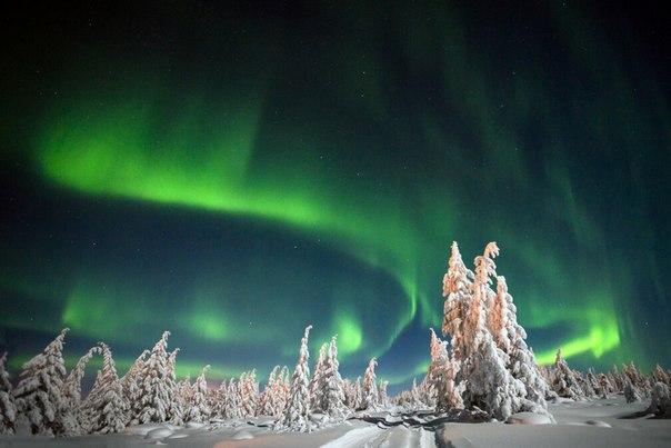 Полярное сияние в Якутии. Автор фото — Оксана Грачева: nat-geo.ru/photo/user/204501/ Спокойной ночи и приятных выходных.