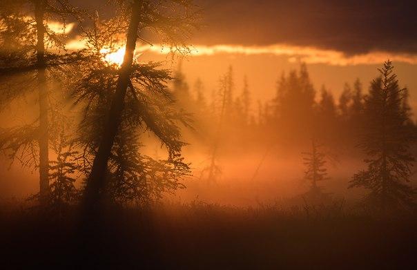El amanecer. El distrito autónomo Yamalo-nenets. El autor de la foto — Andrei Snegirev: nat-geo.ru\/photo\/user\/15958\/