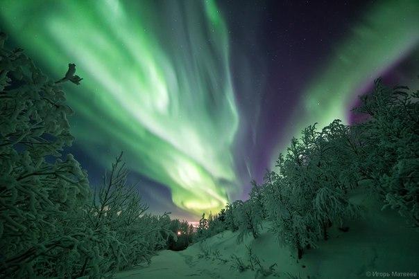 Полярное сияние на Кольском полуострове. Автор фото — Игорь Матвеев: nat-geo.ru/photo/user/208861/ Добрых снов.
