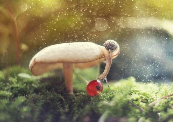 «Находка». Автор фото — Екатерина Науменко: nat-geo.ru/photo/user/209491/