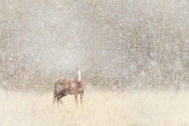 Денис Соломахин, автор фото: «Лошадь и снегопад — случайный снимок. Возвращался со съёмок рассвета, за пару километров от дома начался снегопад, первый в том году. Сквозь снежную пелену услышал ржание. Я сделал снимок и пошёл дальше, а она продолжала смотреть мне вслед… Определённо смотрела — ощущал на спине её печальный взгляд».