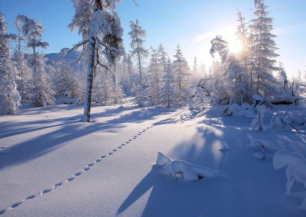 «Следы невиданных зверей». Тайга в районе озера Лабынкыр, Якутия. Автор фото — Александр Губин: nat-geo.ru/photo/user/245491/