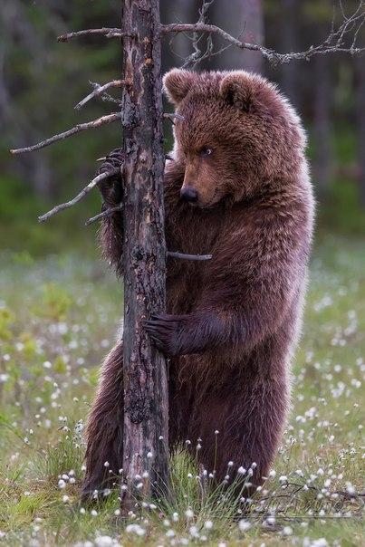 «Высоко стою — далеко смотрю». Автор фото — Дмитрий Архипов, участник фотоконкурса «Дикая природа России»: nat-geo.ru/~dpr