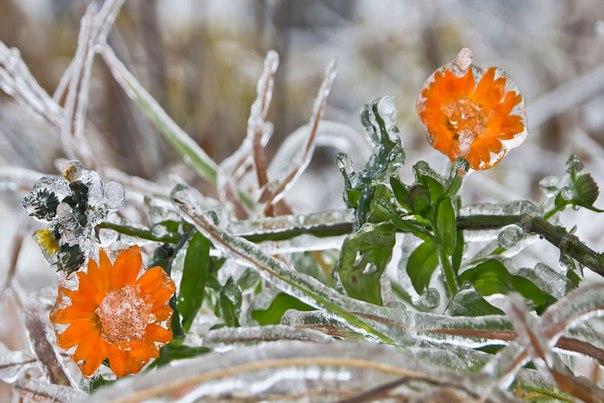 Выбрали 7 снимков с нашего фотоконкурса «Удивительный мир флоры». Свою работу вы можете добавить на нашем сайте: nat-geo.ru/~ClarinsPlanet