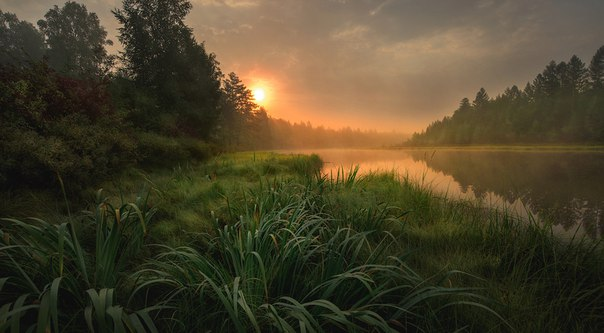 «Утро в тайге». Амурская область. Автор фото — Дмитрий Демидчик: nat-geo.ru/photo/user/27523/