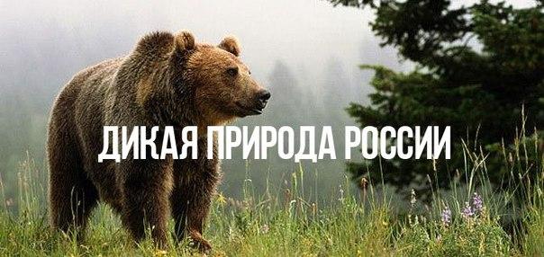 Дикая природа России HD