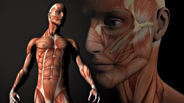 Тело человека. Грани возможного!