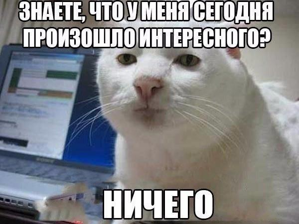 СМЕШНОЕ  ФОТО