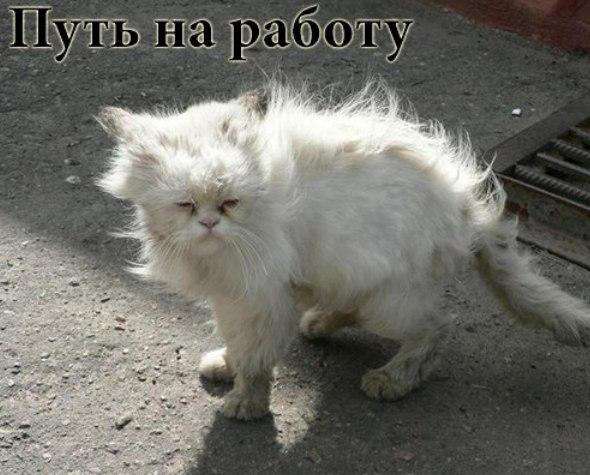 http://cs14112.vk.me/c540102/v540102697/23ec1/upCiZav3GAk.jpg