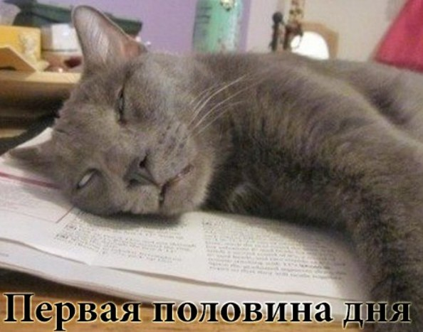 http://cs14112.vk.me/c540102/v540102697/23ec8/x3ekys0d2os.jpg